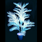 UV Reactive White Kentia Palm. | UV Gear